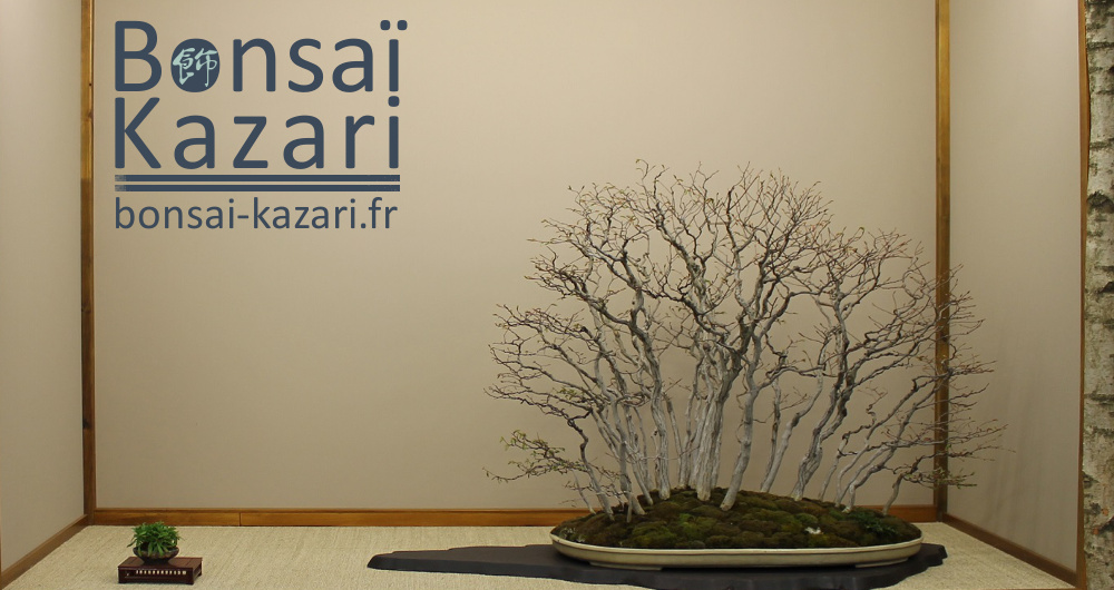 http://bonsai-kazari.fr/wp-content/uploads/2014/04/blog-bonsai-kazari.jpg